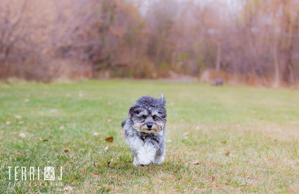 Dog-running-Toronto's-best-dog-photographer