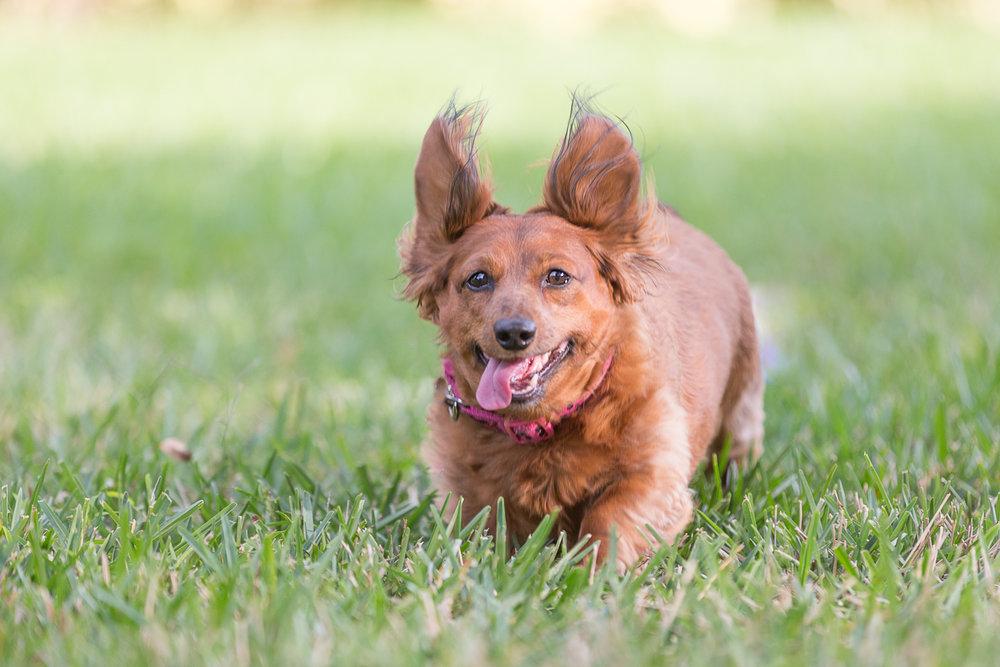 Daisy comes running!