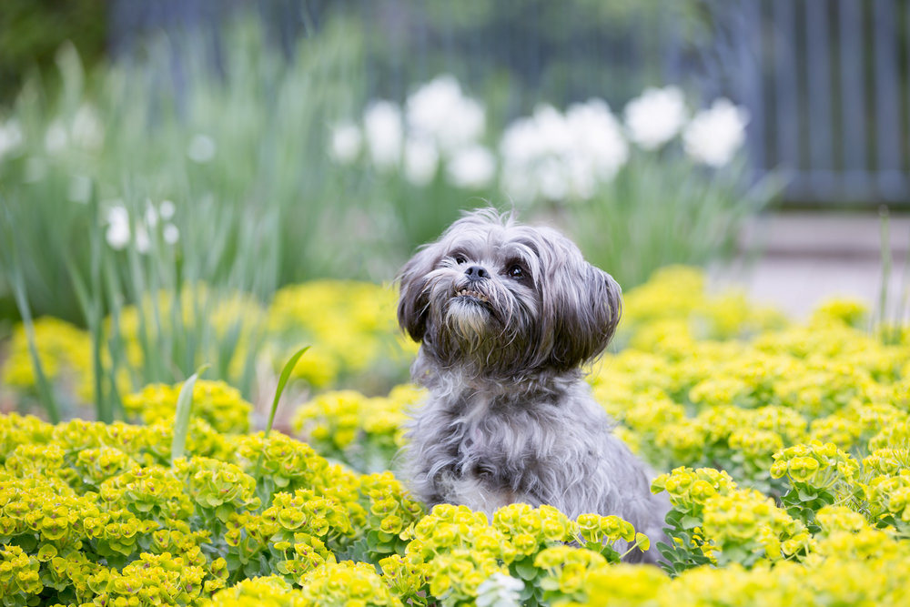 Dog-Photographer-Toronto-11.jpg