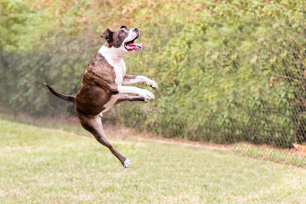 Dog-action-shot-Toronto-Dog-photographer