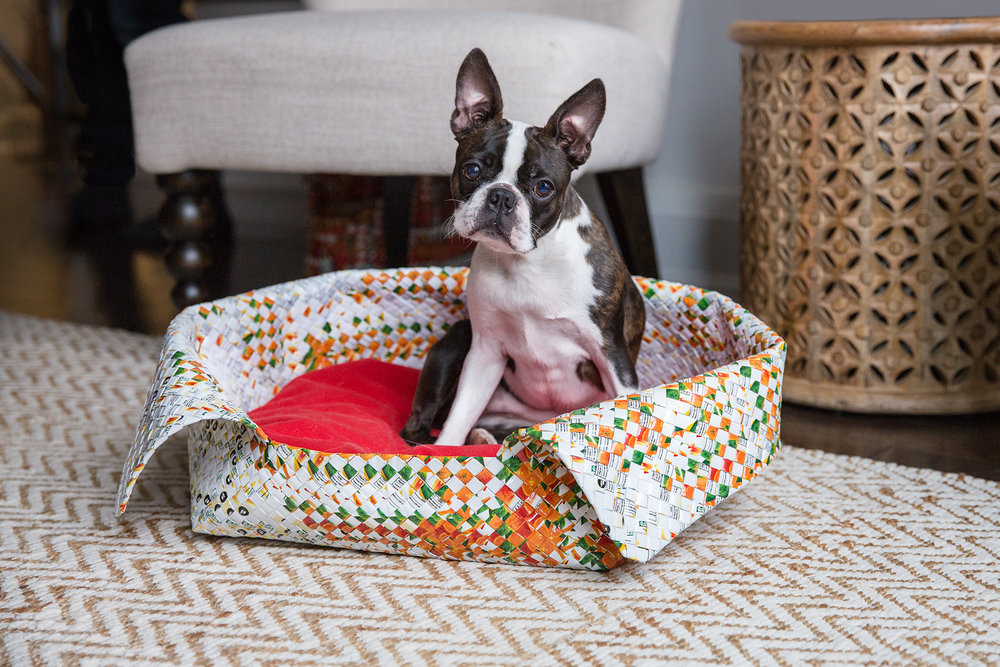 Boston Terrier in a dog bed in Toronto