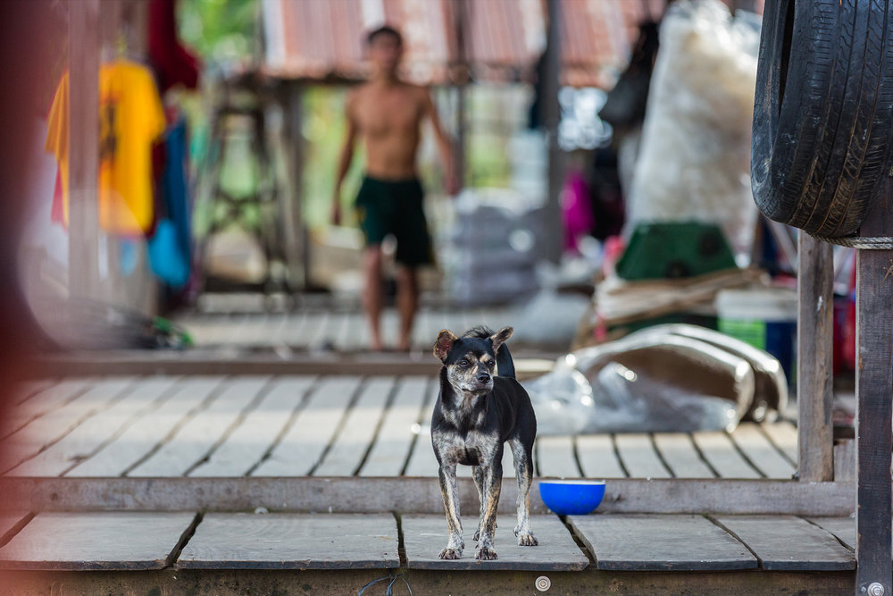 Dog at a Cambodian Fish Farm