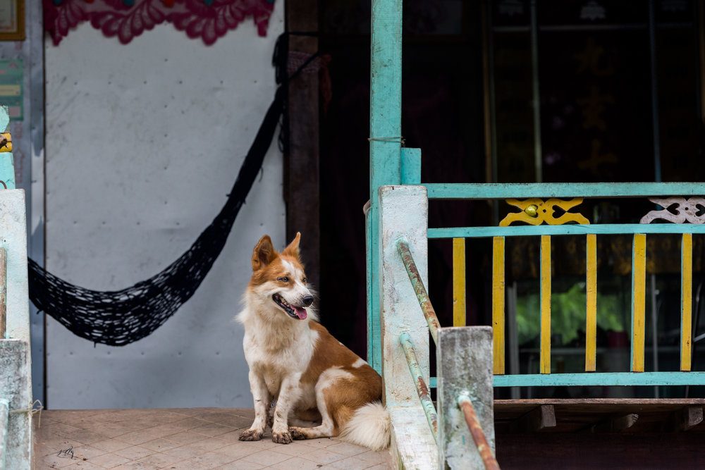 Dog at a village home in rural Cambodia