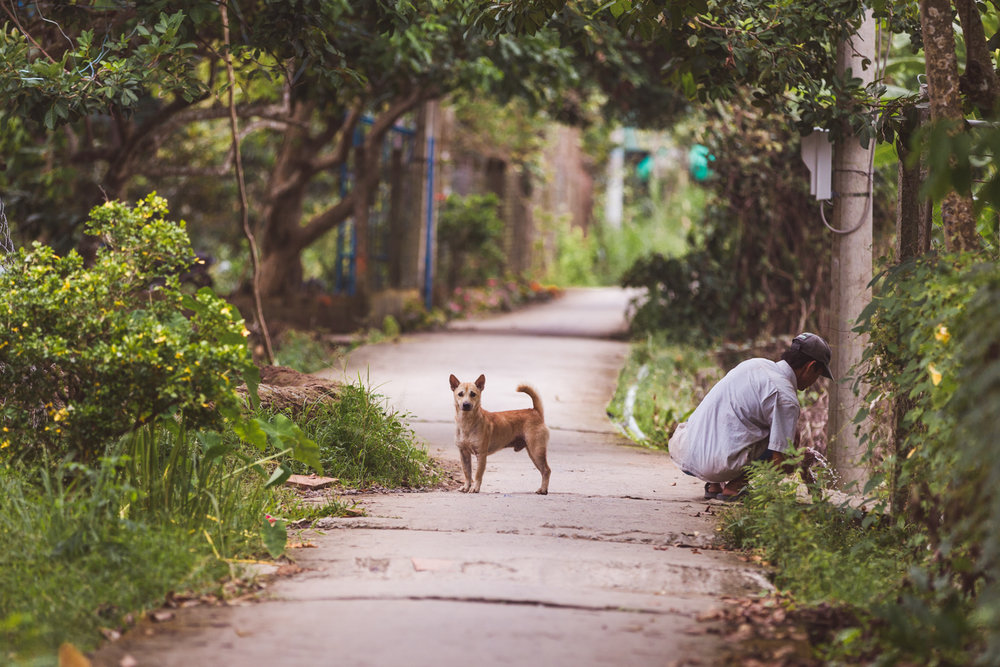 Dog on a rural village road.
