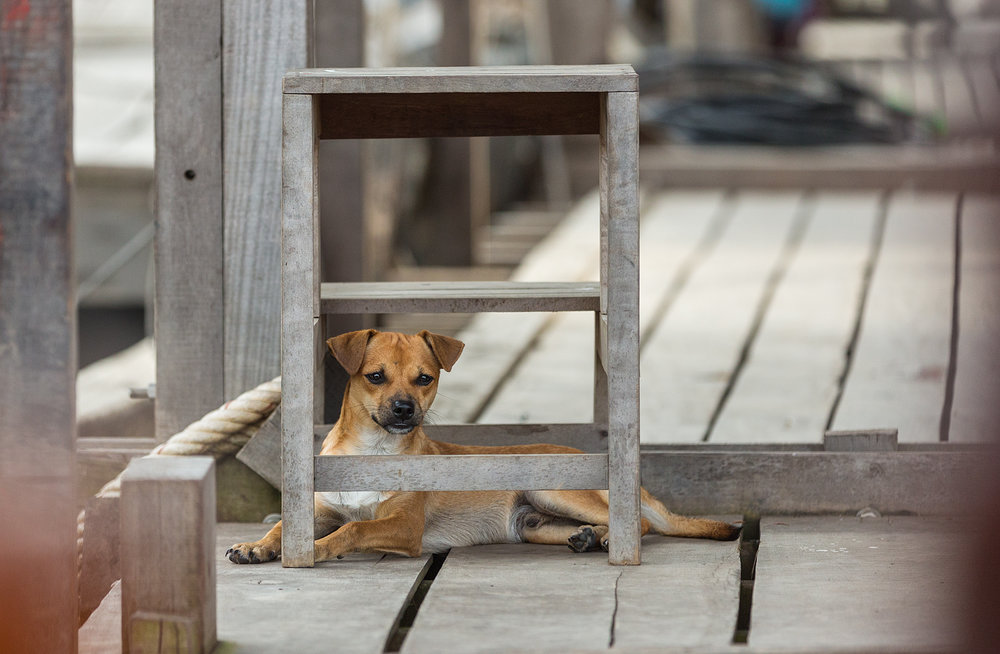 Dog of a local resident relaxes in a Vietnamese village