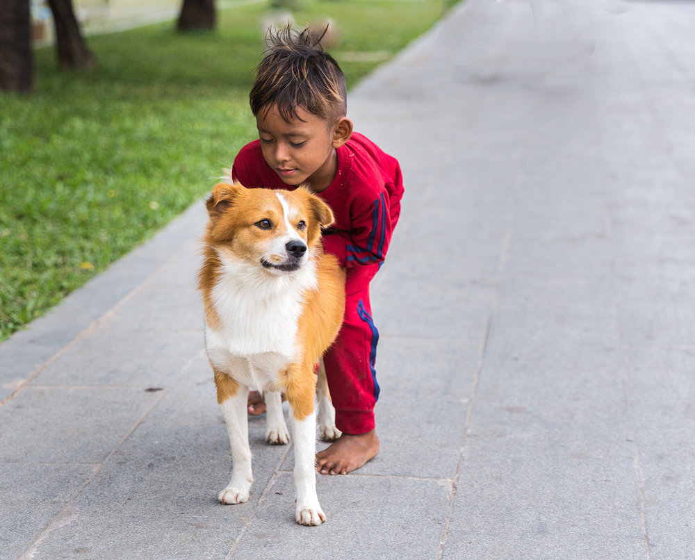This dog was wandering the streets in Hanoi. It growled at me but looks like it may be a family pet!