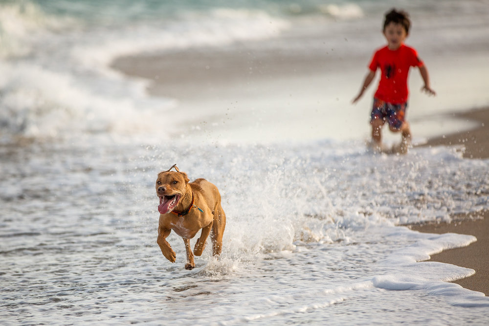 Dog-and-child-photography-playing-beach-Toronto.jpg