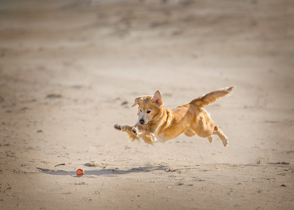 Dog-photography-Beaches-Toronto-ball-cathcing.jpg