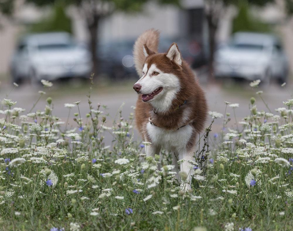 Rescue-dog-Toronto