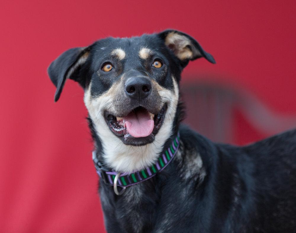 Adopt-a-rescue-dog-Toronto