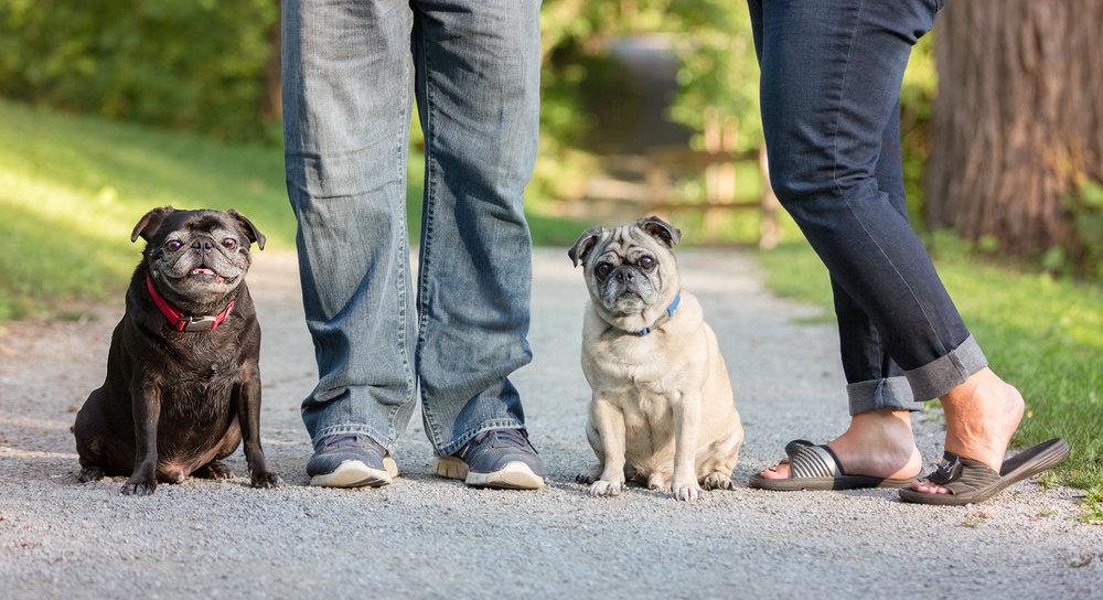 Dog-Photographers-Toronto-Pugs-owners-feet
