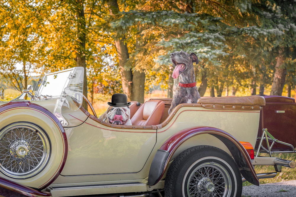 THESE TWO ARE CERTAINLY ENJOYING THEIR RIDE IN A CLASSIC CAR!
