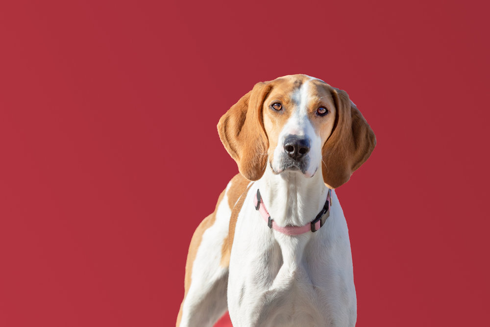 THE RED BACKGROUND DRAWS ATTENTION TO THIS DOG