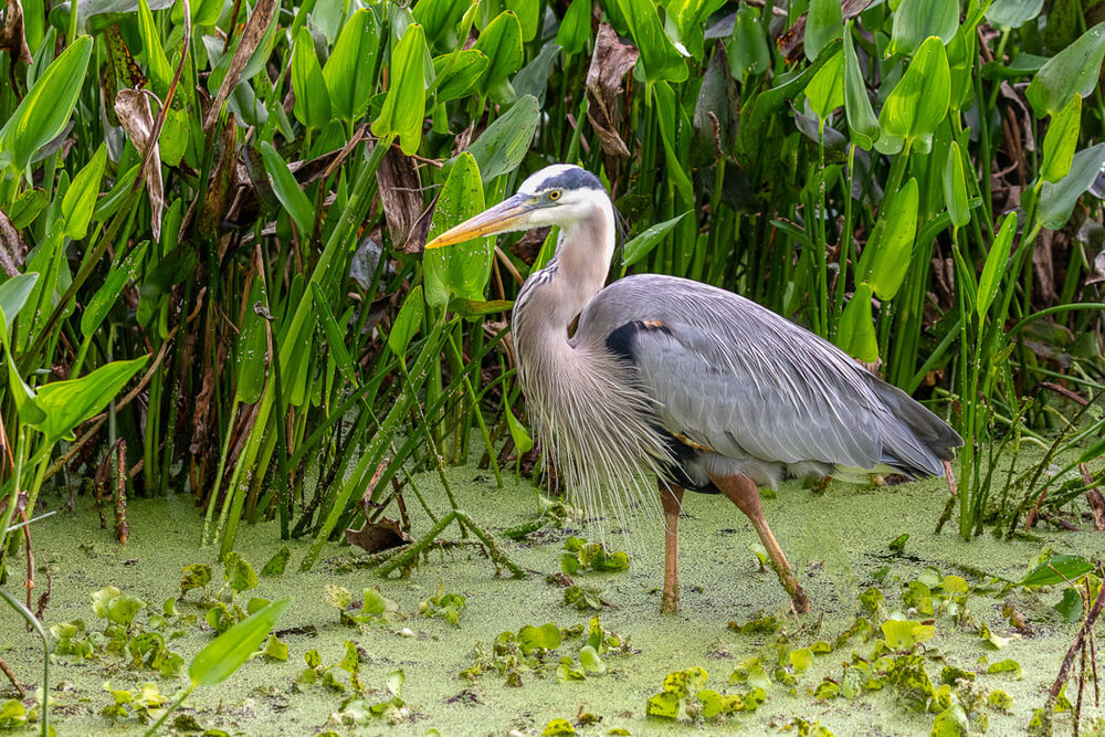 Florida_wildlife-birds (3 of 3).jpg