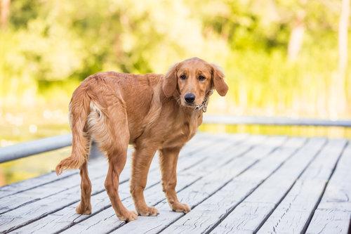 Terri J Photography | Toronto Professional Pet & Dog Photographer