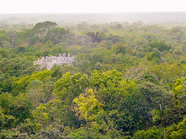 The forests of the Yucatan will play an integral role addressing climate change
