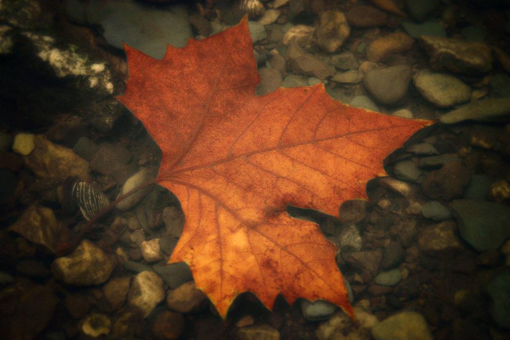 Autumn Adrift IV_3.jpg