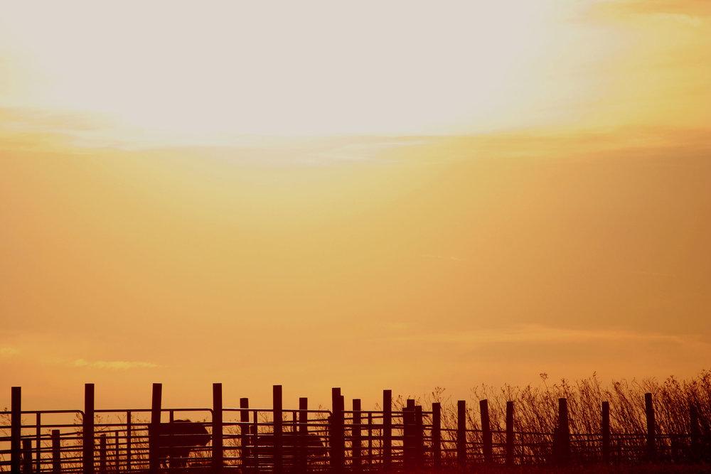 Clouds Catching Prairie Sun_1.jpg