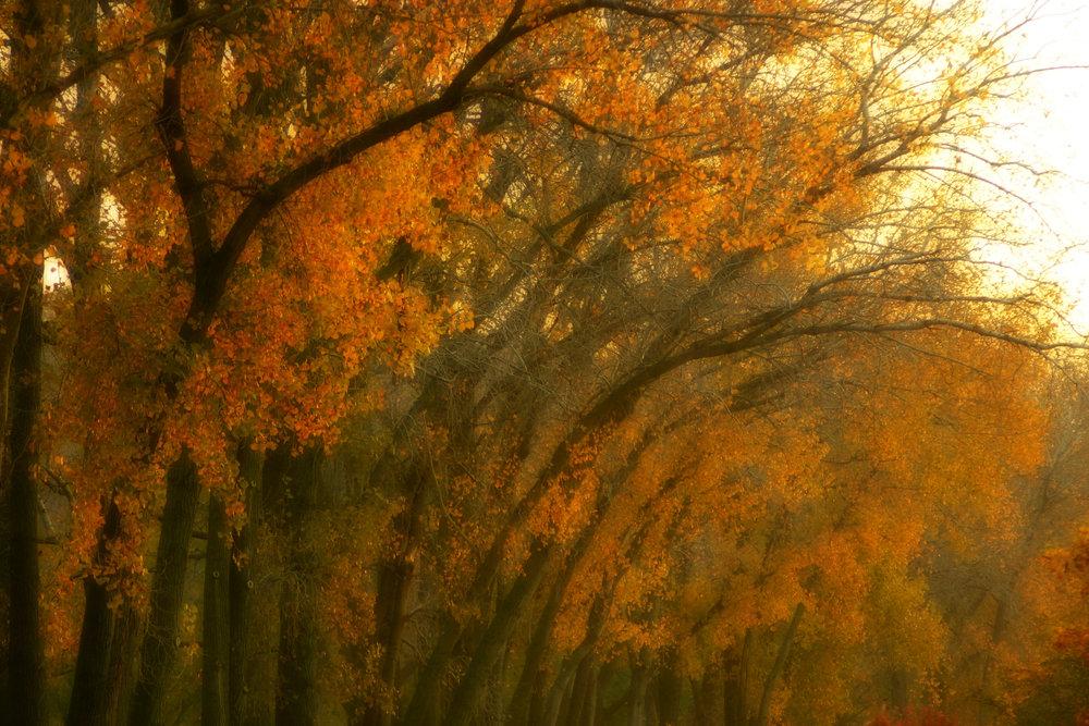 November Riverside.jpg