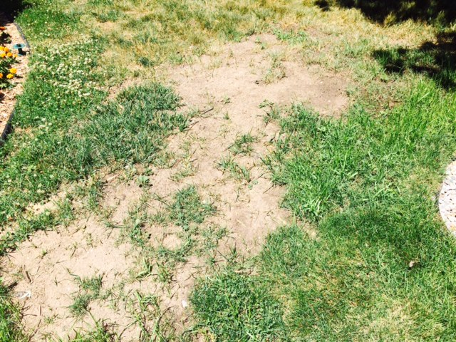 Grass resistant soil?
