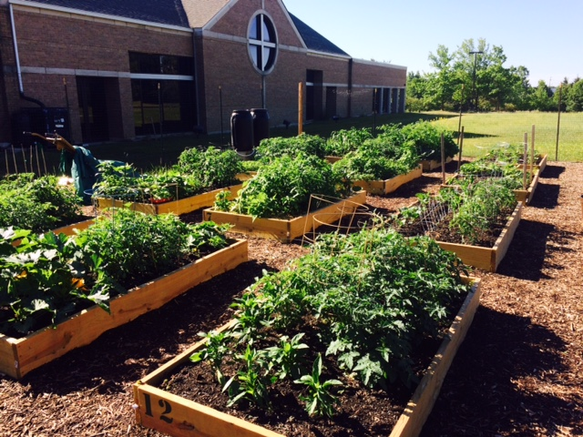 Thanks to fertile soil, Grace's Acre is growing robustly in late June. These raised beds adjoin a large area of ground rows that supply our food pantry and market program.
