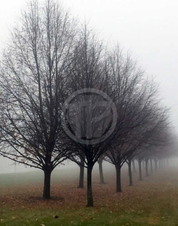 "Trees in Fog 11"" x 14"" photograph"