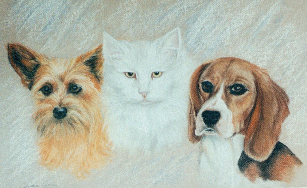 Dan's Pets.jpg