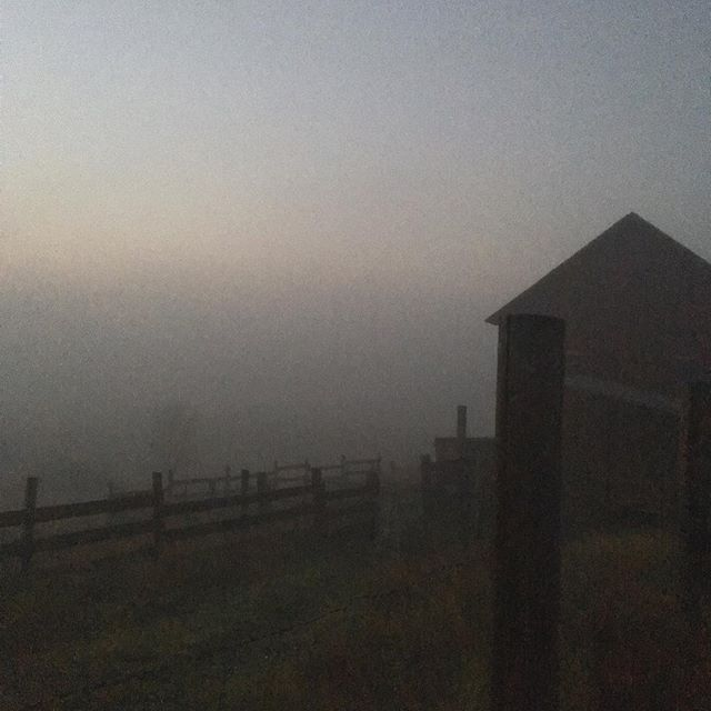 Watched the coyotes scamper off this cold and foggy morning as I went to milk the goats. Sign up for Herd Share 👉 https://www.fairfoodfarm.com/herd-share/ . . . #goats #goatdairy #raw #rawfood  #rawmilk #yogurt #rawcheese #csa #herdshare #organic #smallfarm #farmtotable #farmlife #realfood #youngfarmers #knowyourfarmer #womenwhofarm #eatlocal #gorgegrown #gorgelife #hoodriver #hoodriveroregon #hoodgorge #portland #portlandoregon #pdxeats #pdxfoodie #portlandfood