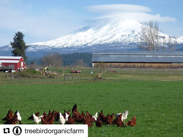 Help Tree Bird Organics buy their farm!! Here's their post:  Dear friends of Treebird,  You may have heard that our landlords told us that we needed to move our farm. We are excited to say that we have come up with a tentative agreement to buy the property to keep farming in this beautiful spot.  We apologize if we have missed your calls or emails as we are just now getting back into the daily business and working hard to get caught up.  While we work on finalizing the purchase of the property, we need your help now more than ever. We need to raise at least $25,000 by the end of March so that we are in a better position to start the main growing season strong and take on a mortgage payment sooner than we had anticipated.  We are asking you, our loyal customers, to invest in your food for the year by purchasing a cash card in our new online store (think CSA style). The cash card amount will be applied to your account for purchases online, on farm, or at farmers markets. There are additional savings if you purchase some of the larger domination cash cards.  We so appreciate everyone's support in what has been a very difficult time for us. We are hopeful that we can settle down now and get right to work providing nutrient dense, local food for many more years.  Please help spread the word to your friends and family. We are still delivering every two weeks (year round) to the Gorge and Portland Metro area and now every 4 weeks to Seattle.  #golocal #eatlocal #gorgegrown #pastureraised  https://treebirdorganics.grazecart.com/store/cash-cards