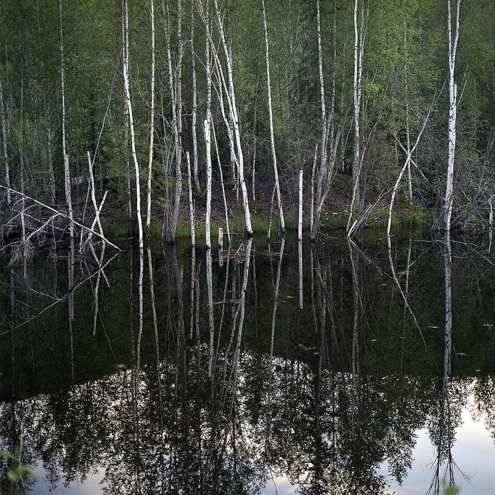 Birch Pond_v01.jpg