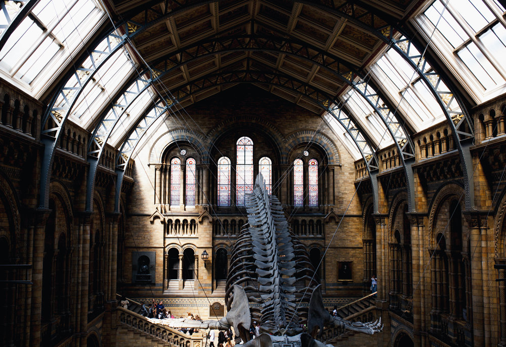 The Natural History Museum in London. Gorgeous.
