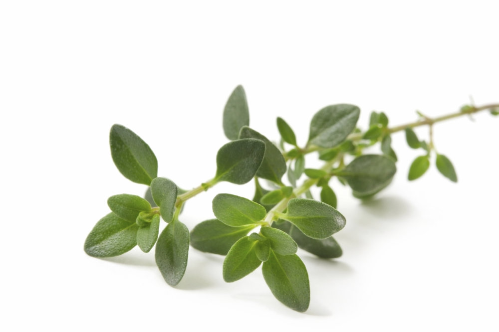 Add Benefect, our AntiMicrobial, to Sanitize and Reduce Allergens. When CitruSolution is Combined with this Thyme-based disinfectant our customers have experienced a Reduction, if not a complete Cessation of Allergy Symptoms