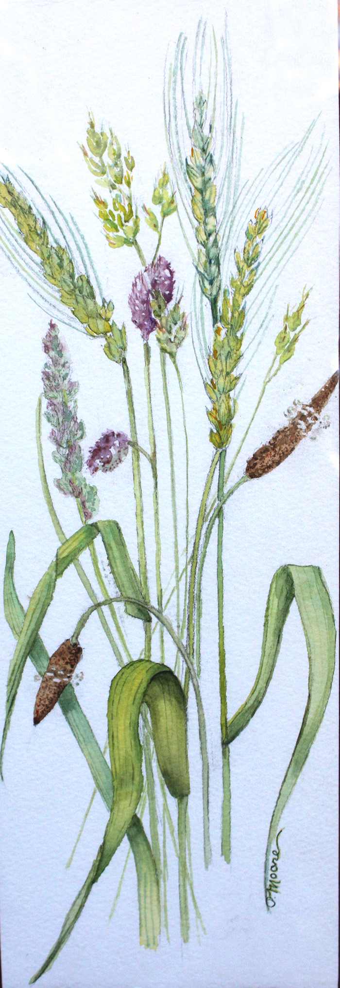 Grasses  8x12 in Watercolor Private Collection
