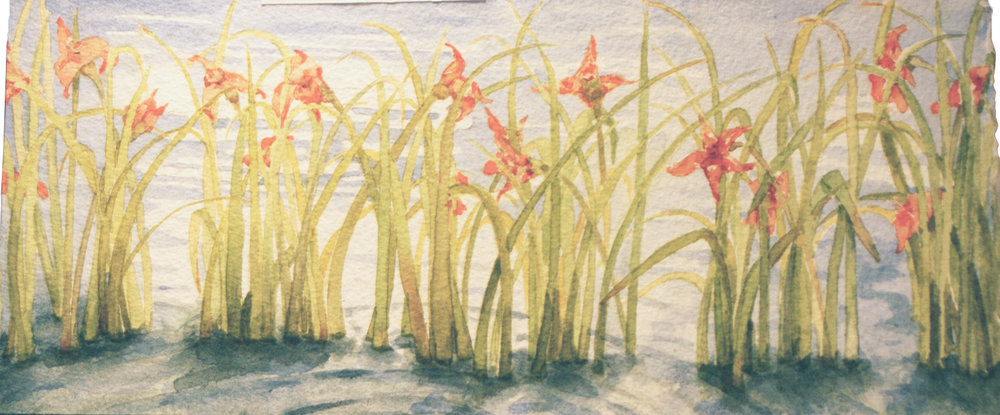 Water Lilies  5x10 in Watercolor
