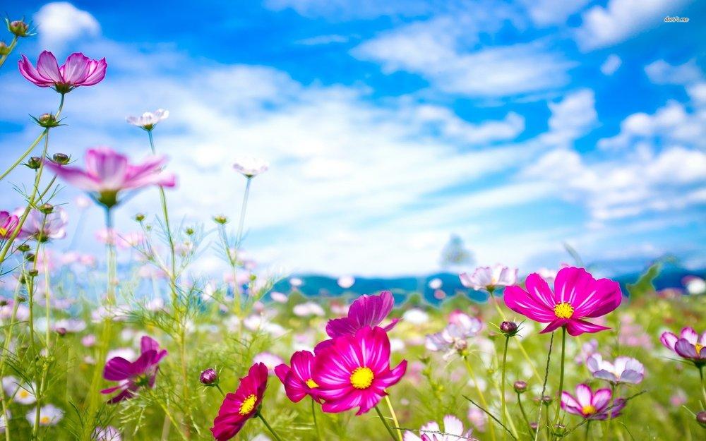 flower-wallpaper.jpg