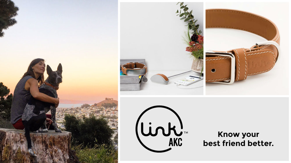 Origin worked with LINK AKC to create a smart dog collar using our experience design method.