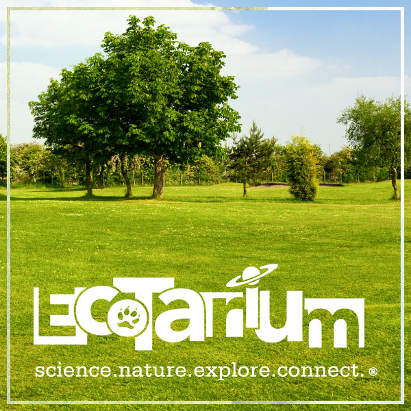 The EcoTarium Science Museum needed brand support for two exhibits they were building; City Science and Wild Cat Station.