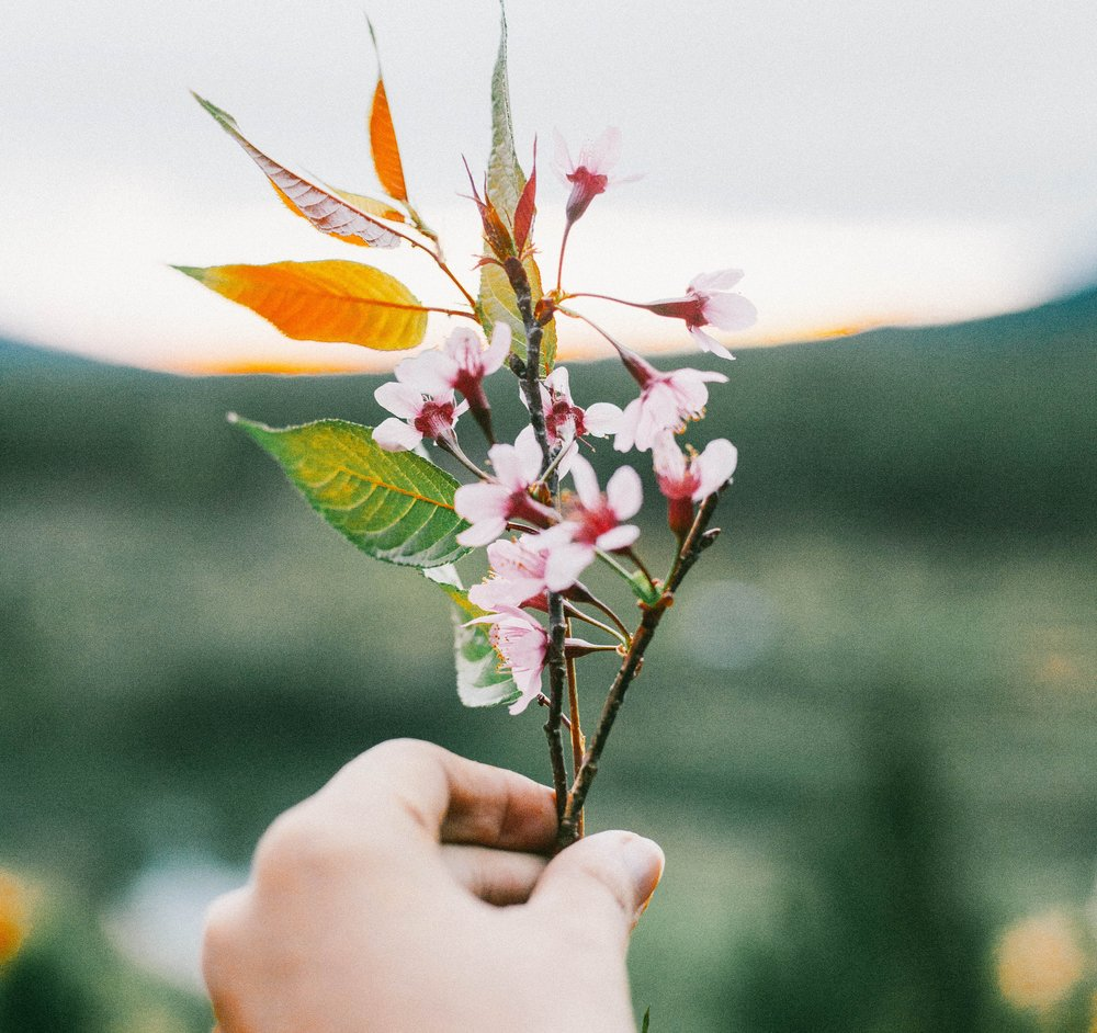 Royalty free photo by  Nguyen Anh Dung on  Unsplash