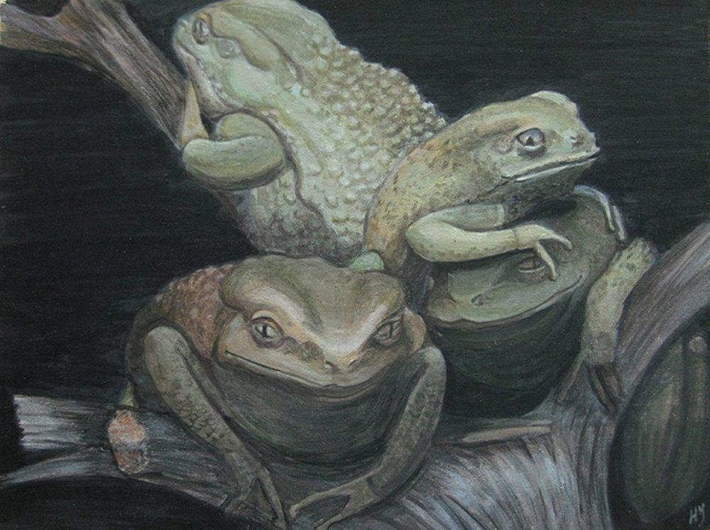 Waxy Tree Frogs