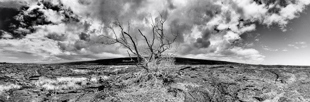 panorama_dead_tree_8285.jpg