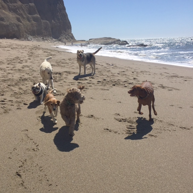 Santa Cruz Dog Walking