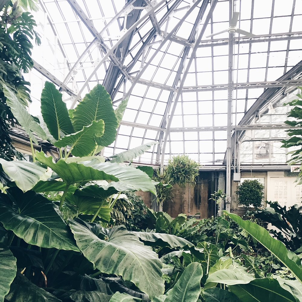 Garfield Park Conservatory. Photo by Grace Niu Design.