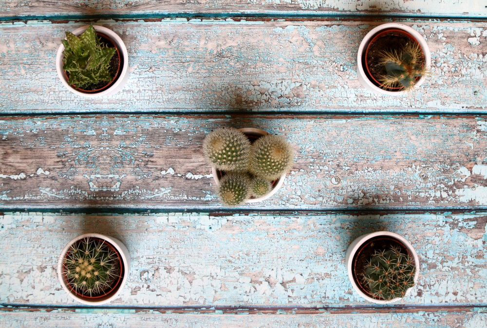 where to place your cactus to ensure good feng shui