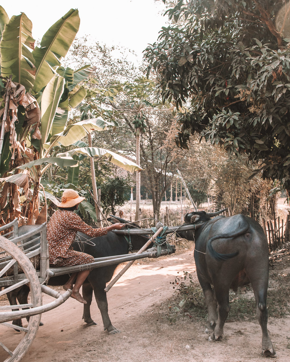 simple living siem reap woman cambodia