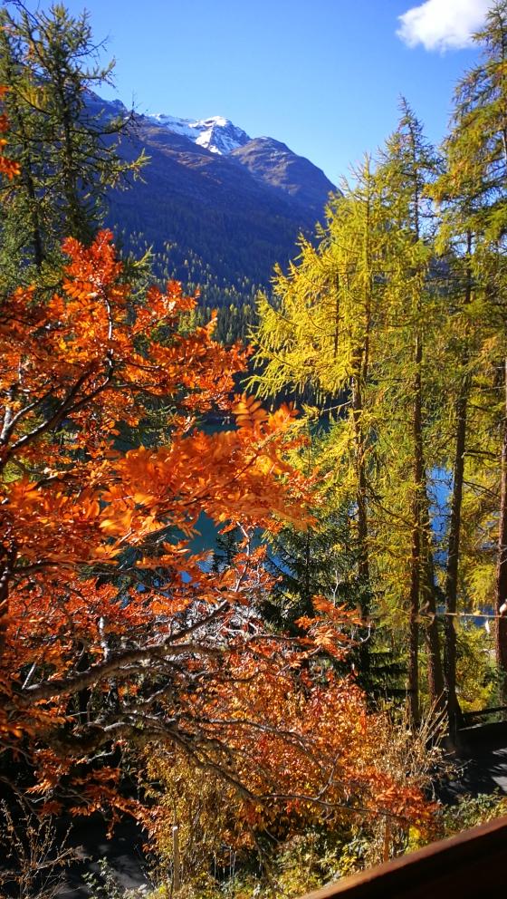 Goldener Engadiner Herbst.jpg