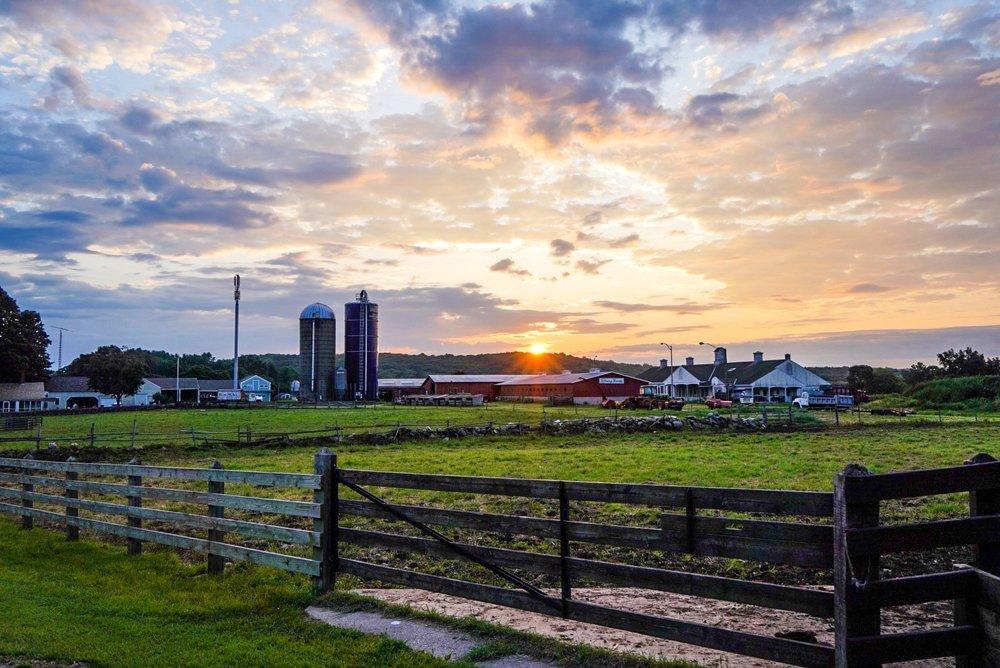 Tiffany Farms