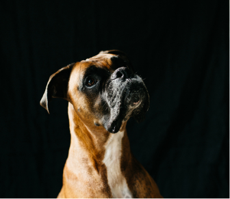 The dog wash charleston dog groomer screen shot 2017 09 27 at 42420 pmg solutioingenieria Gallery