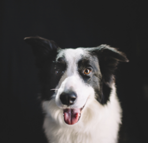 The dog wash charleston dog groomer screen shot 2017 09 27 at 42428 pmg solutioingenieria Gallery