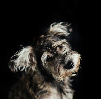 The dog wash charleston dog groomer screen shot 2017 09 27 at 42435 pmg solutioingenieria Gallery