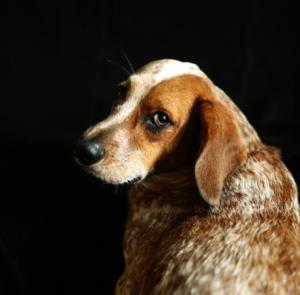 The dog wash charleston dog groomer screen shot 2017 09 27 at 42447 pmg solutioingenieria Choice Image